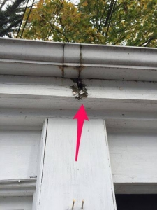 Leaking gutters causing fascia rot